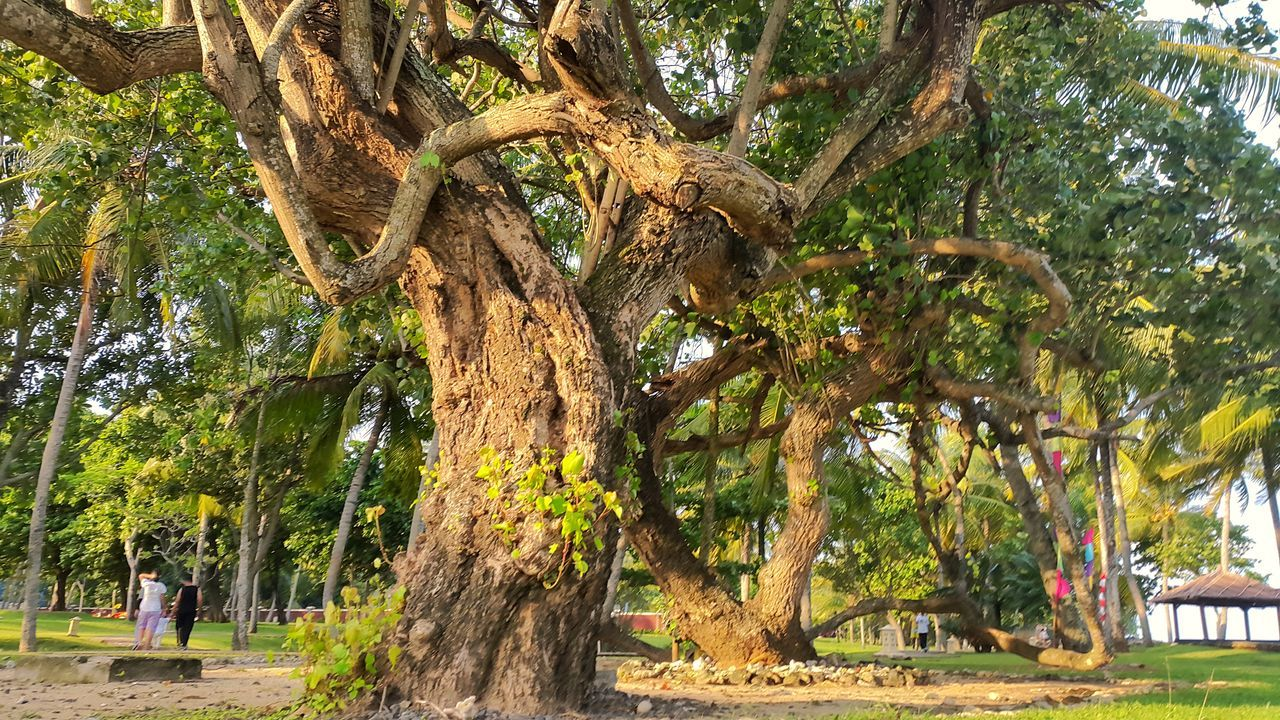 tree, tree trunk, day, growth, nature, outdoors, palm tree, no people