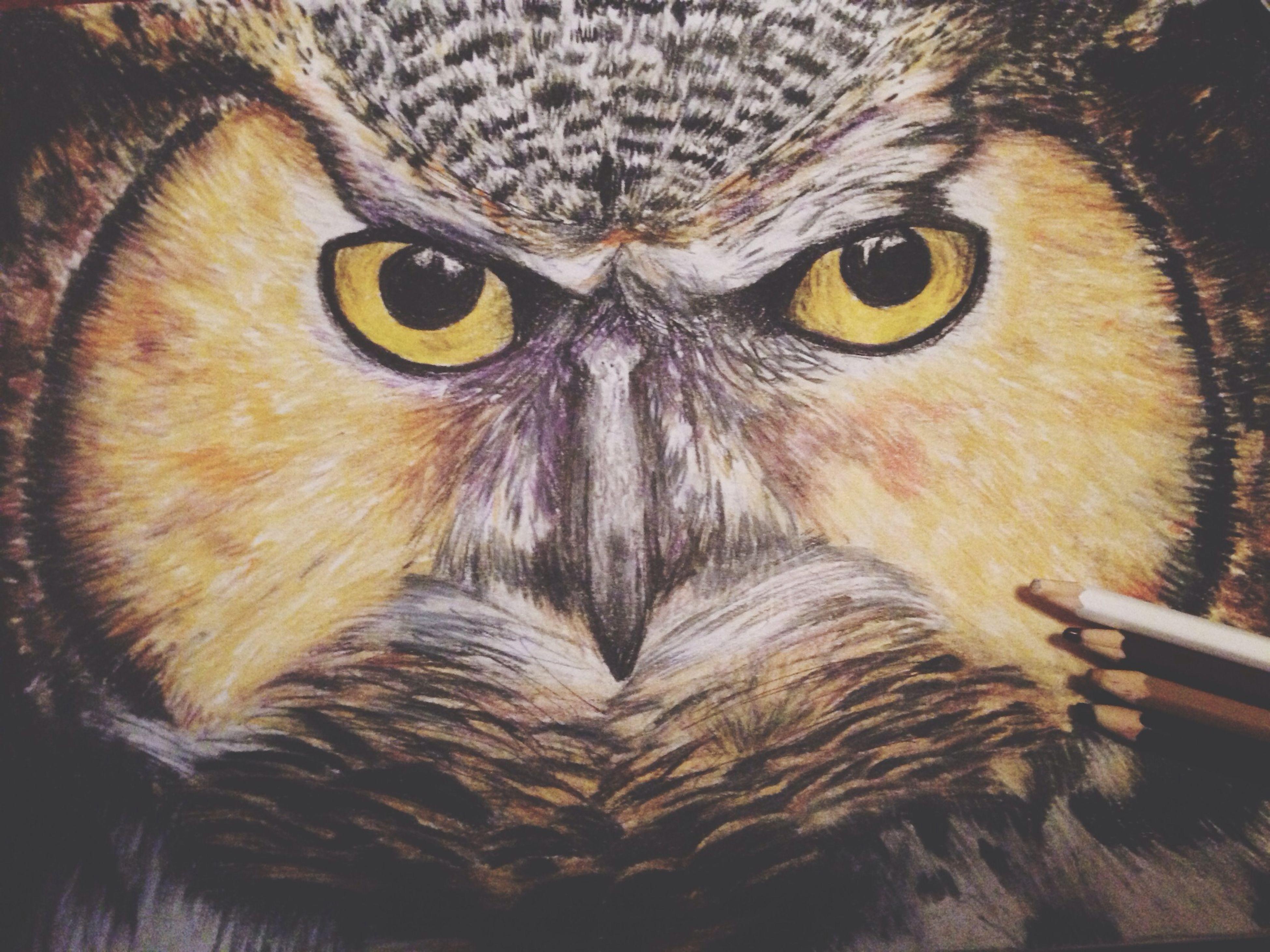 animal themes, one animal, bird, indoors, animal head, animal eye, close-up, portrait, looking at camera, cat, domestic cat, animal body part, pets, feline, whisker, domestic animals, wildlife, animals in the wild, no people, zoology