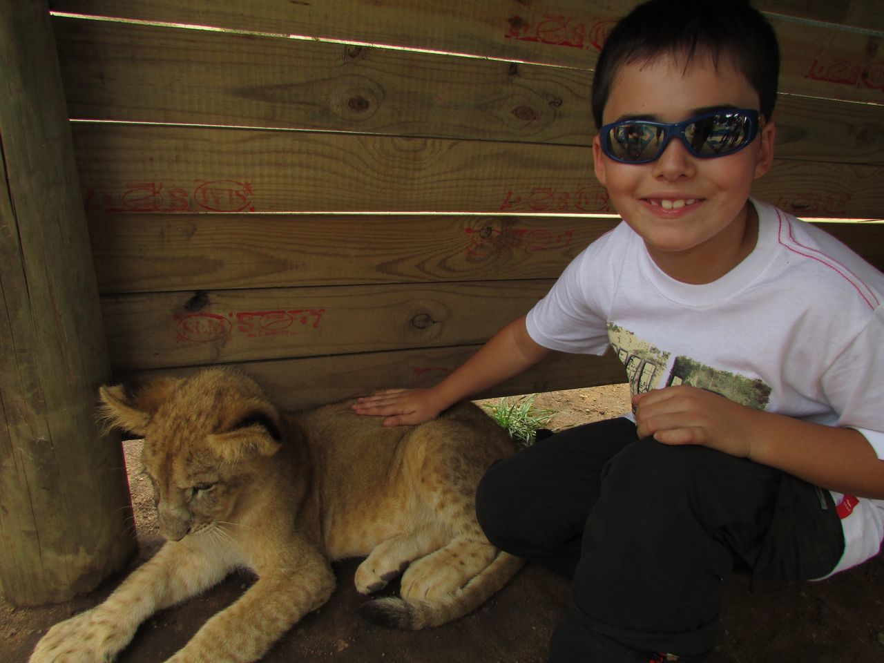 Portrait Of Smiling Boy Crouching By Cub At Johannesburg Lion Park