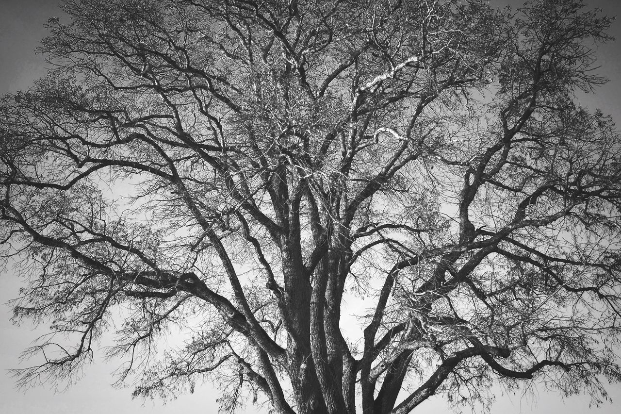Tree Branch Bare Tree Nature Low Angle View Tranquility No People Sky Beauty In Nature Growth Outdoors Day Scenics Treetop Blackandwhite
