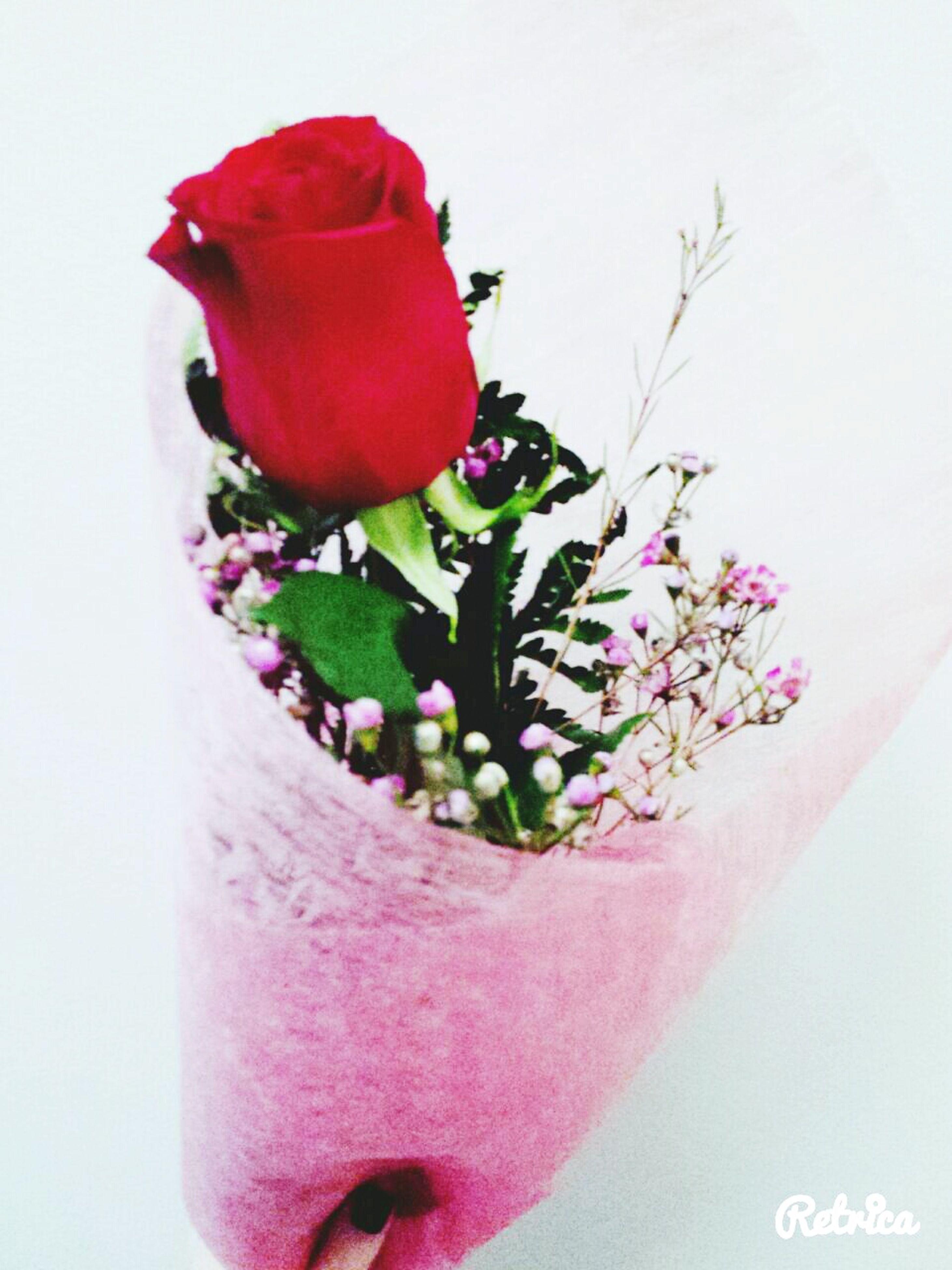 flower, white background, freshness, petal, studio shot, red, fragility, indoors, close-up, flower head, rose - flower, vase, stem, rose, pink color, plant, single flower, beauty in nature, leaf, wall - building feature