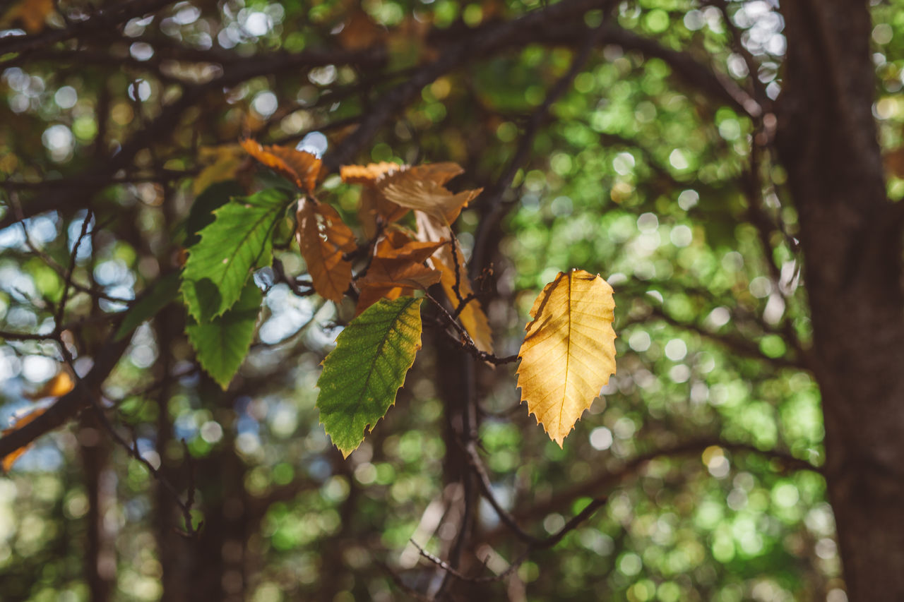 Autumn Beauty In Nature Branch Close-up Day Growth Leaf Low Angle View Nature No People Outdoors Plant Tree
