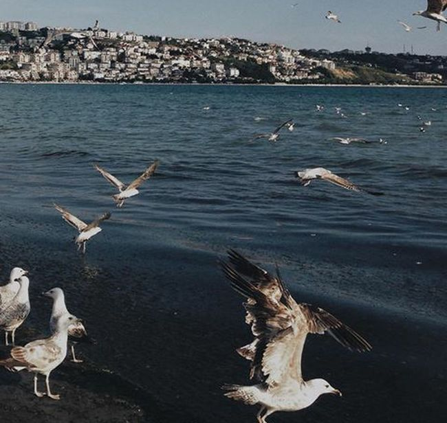 Nature Flock Of Birds Freedom Vosvossociety Hi! My Hobby Bird Flying Sea Water