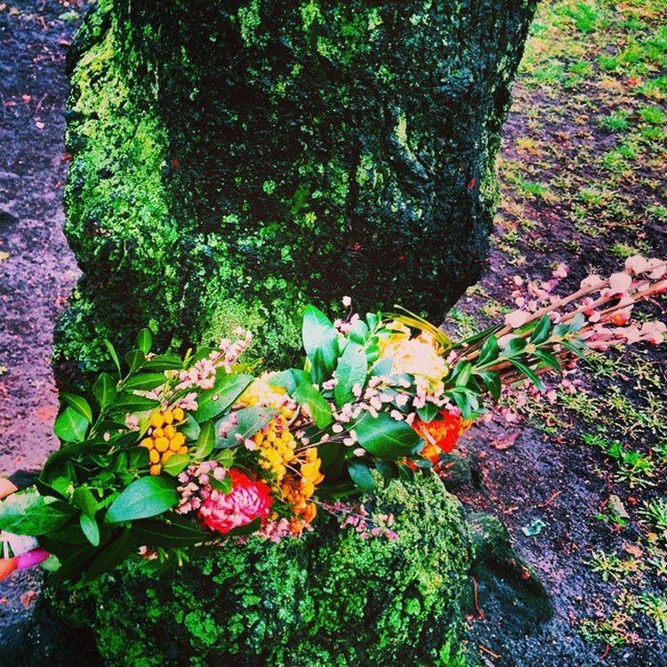 Просто потрясающие букеты делают во Львове на католическое вербное воскресенье🌿 Купила аж два🙉 Вербноевоскресенье вербнанеділя букет Bouquet Flowers цветы львов львів Lvivgram Lvivblog Lviving Lviv Lvivforyou Tree котики дерево католики PalmSunday Sunday Catholic Romancatholic верба Willow Pussywillow Vscolviv