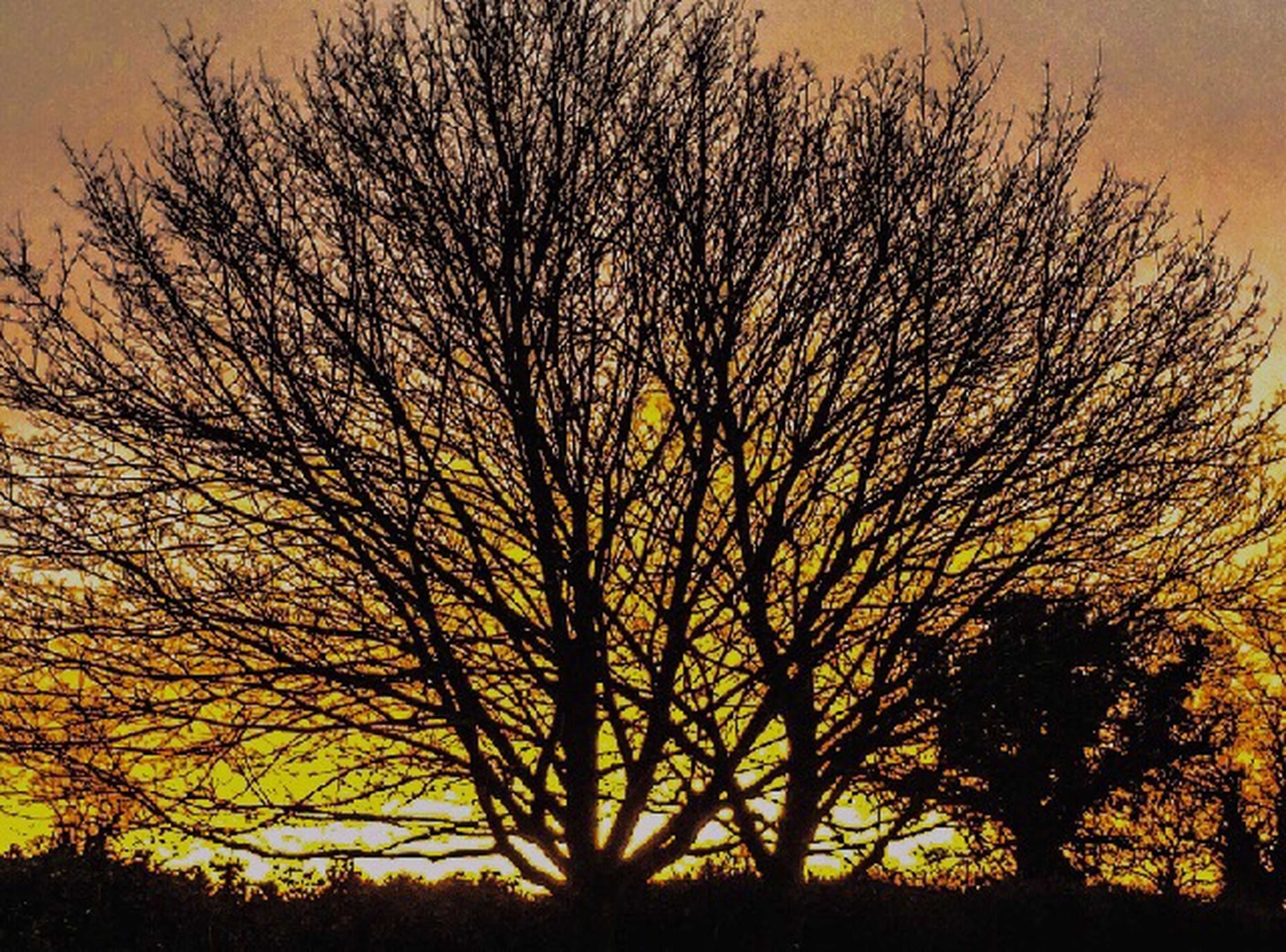 sunset, bare tree, silhouette, orange color, tree, branch, beauty in nature, tranquility, scenics, tranquil scene, sky, yellow, nature, idyllic, low angle view, growth, sun, outdoors, no people, majestic