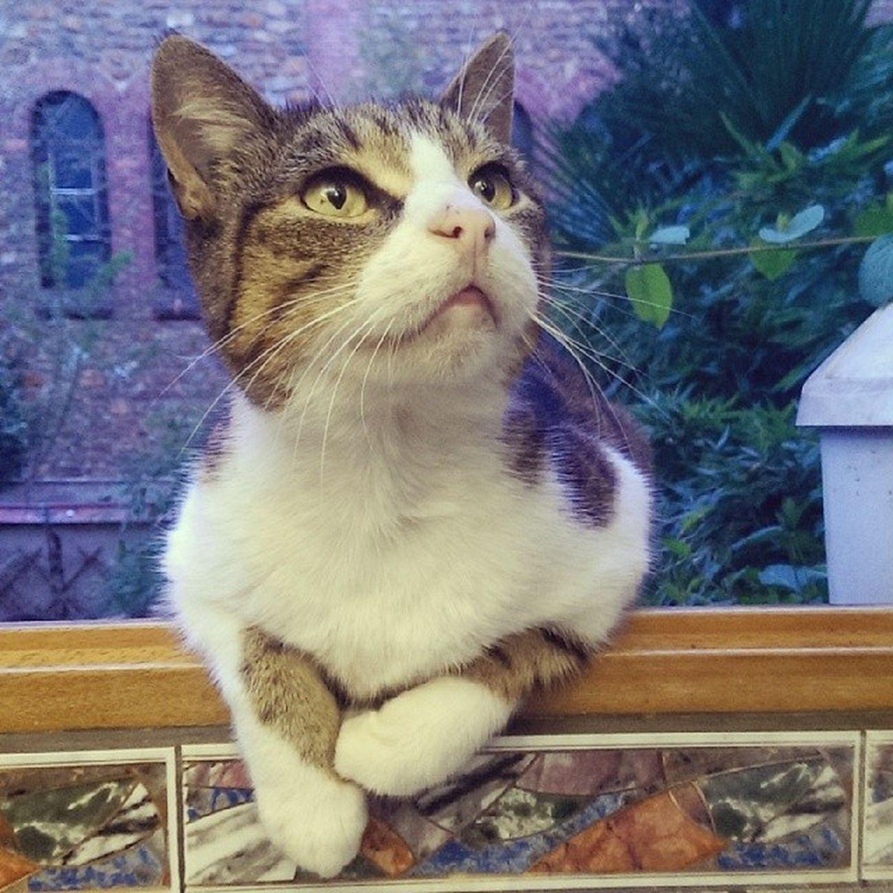 Petit beybey. Cat Instacat Tropdlove