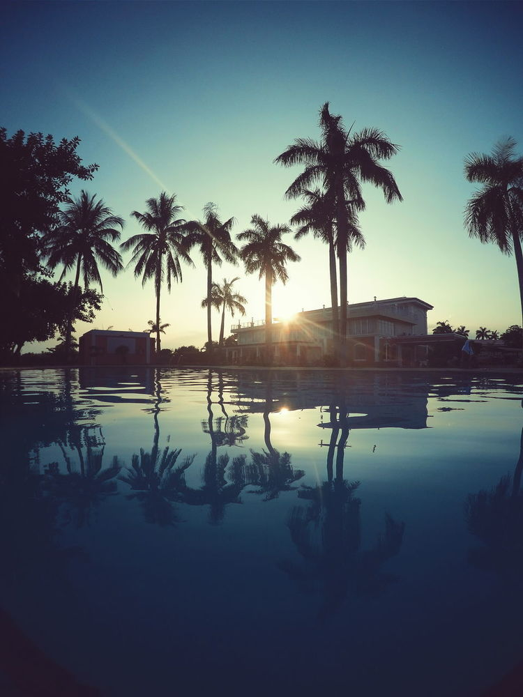 Palm Tree Tree Water Reflection Outdoors Silhouette No People Nature Sky Day City Summer Pool Swimmming Philippines Sunset Sunrise Sun Clouds Vacation Relax Hotel Luxury Pool Swim First Eyeem Photo