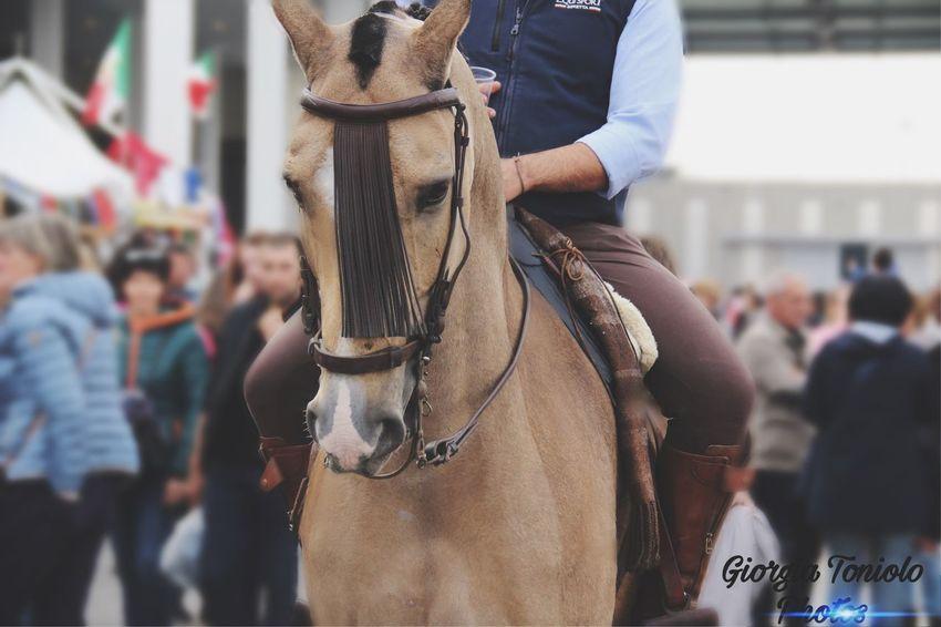 Dressage horse, spanish, Verona Fiera Dressage EyeEm Selects Horse Bridle Domestic Animals Working Animal One Animal Horseback Riding Jockey Day Riding Outdoors Livestock