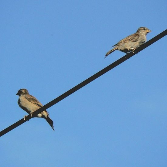 Sparrow Bird Summer Greenery Nature Animals Feathers Sweet Photographer📷 Photoblogger Amateurphotographer  Amateur Like4like L4l Follow4follow F4F