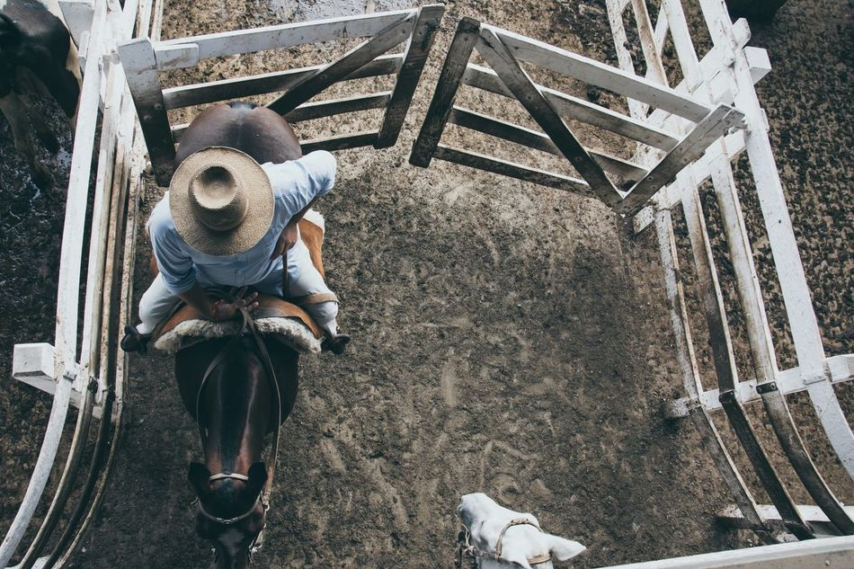 Beautiful stock photos of cowboy, Animal Themes, Animals In Captivity, Bridle, Casual Clothing