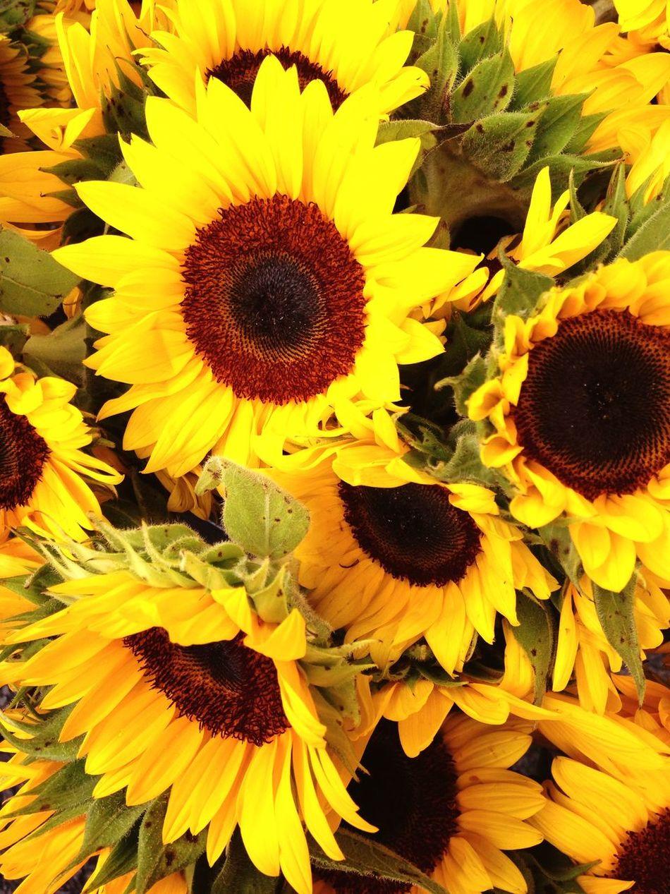 Taking Photos Enjoying Life Sunflowers 🌻 Spring Into Spring Lemon By Motorola