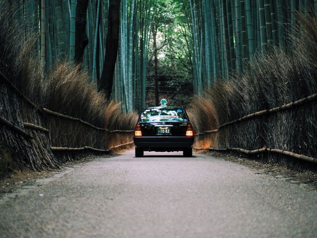 Taxi in Arashiyama Bamboo Grove Forest Arashiyama Bamboo Bamboo - Plant Bamboo Forest Bamboo Grove Car Day Driving Fence Footpath Green Japan Kyoto Land Vehicle Lights Mode Of Transport Nature No People Outdoors Taxi The Way Forward Transportation Tree Treelined
