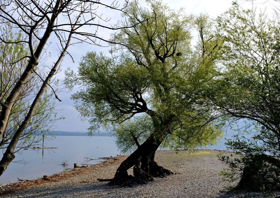 Beauty In Nature Bodensee Nature No People Outdoors Scenics Tranquil Scene Tranquility Tree Water