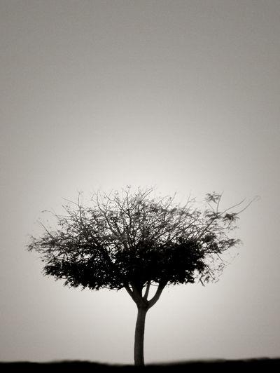 Trees speaks to you EyeEm Best Shots - Nature Monochrome EyeEm Fine Art Photography Popular Photos Nature_collection Fineart_photobw Black & White