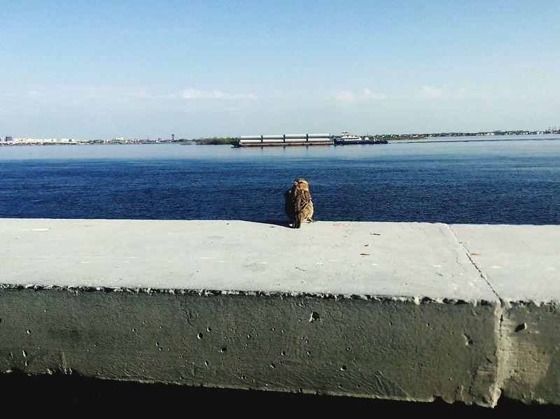 воробей Sparrow Bird River Volga River Promenade птица река Река Волга Волга набережная Day No People Water вода Barge EyeEmNewHere
