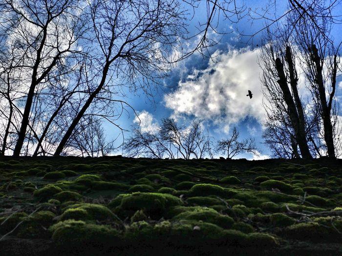 Sky Tree Nature Growth Cloud - Sky Outdoors No People Low Angle View roof moss bird november