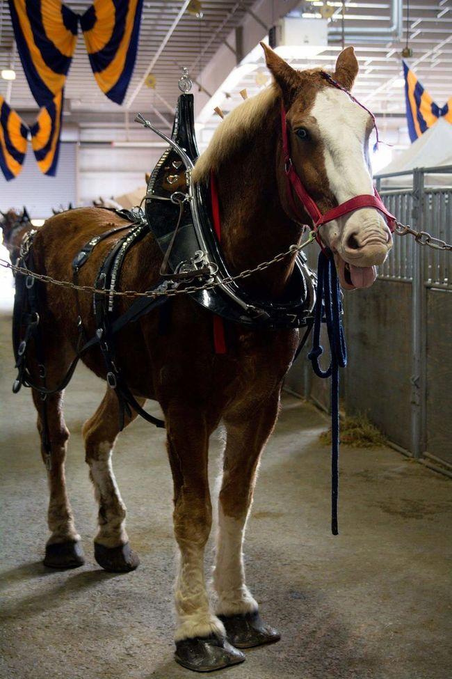 Hey ladies! Horse Showhorse Farm Show Pennsylvania