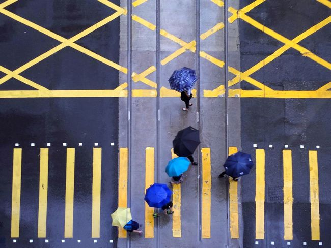 Multi Colored Vibrant Color Weather Rainy Umbrellas Overhead View People Crossing The Street Day City Life Urban Blue Umbrellas Blue And Yellow Outdoors Colorful Pedestrians Walking Pedestrian Crossing Hong Kong