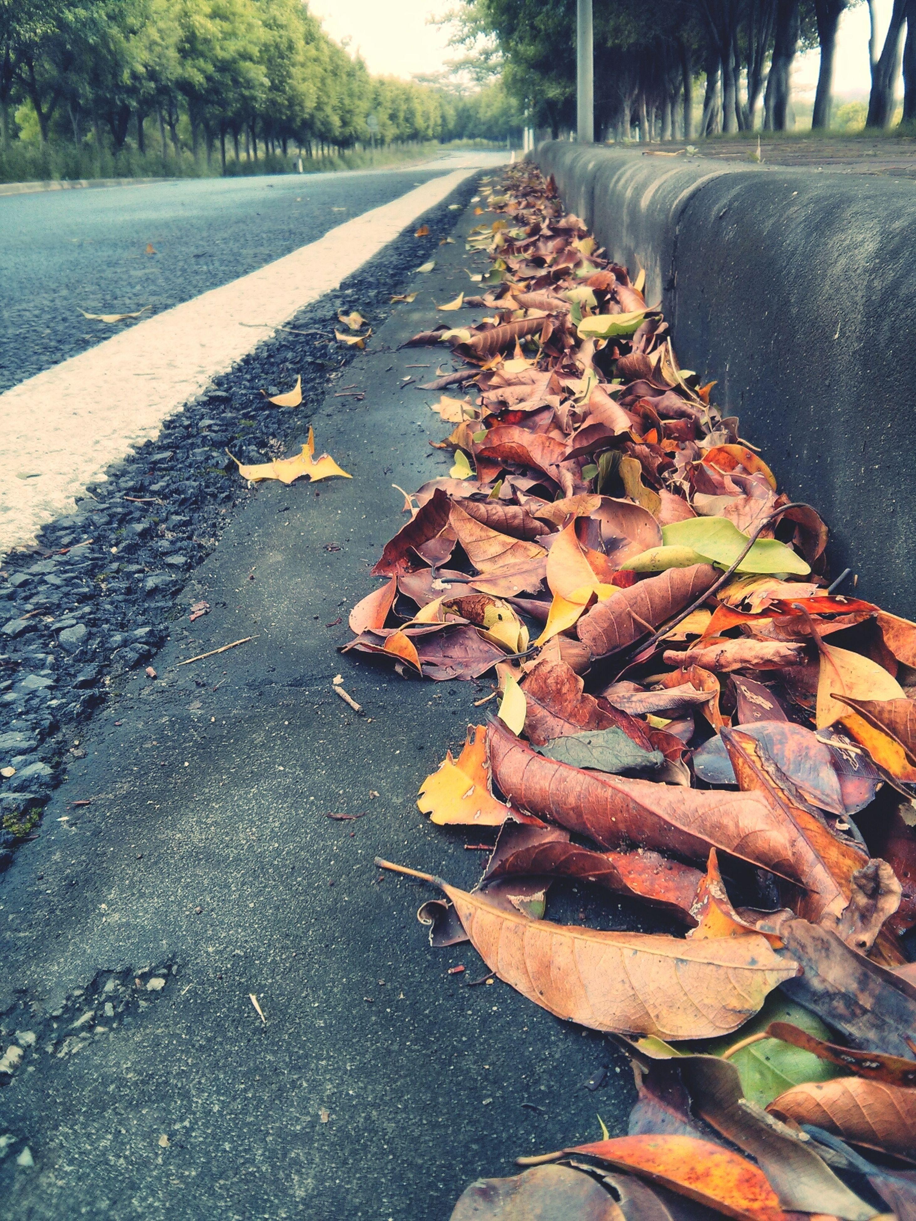autumn, transportation, leaf, season, change, the way forward, street, diminishing perspective, road, leaves, dry, vanishing point, fallen, asphalt, surface level, road marking, outdoors, day, nature, tree