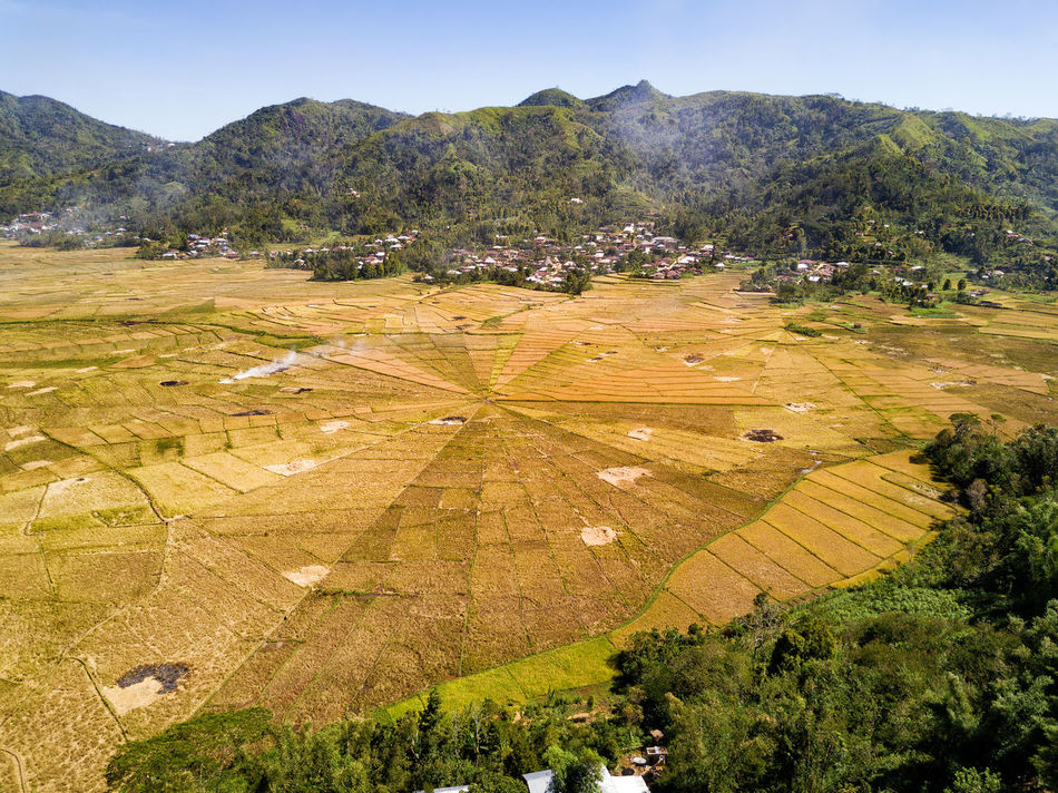 Aerial view illustrating slash and burn agricultural techniques at the spider rice fields, a popular tourist attraction on the island of Flores, Indonesia. DJI X Eyeem Agriculture DJI Mavic Pro Flores Island INDONESIA Rice Spider Tourist Travel Travel Photography Aerial Aerial Photography Aerial View Destination Dji East Nusa Tenggara Flores Harvest Landscape Rice Fields  Spider Rice Fields Tourism Tropical Vacation Yellow