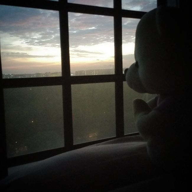 """"""" This is the last time , that I'm ever gonna come here again . """" - angels & devils //dishwalla ? Feat. : @lorainee24 's bear . Thisarguementisstillinvalid Bear Sunset Window"""