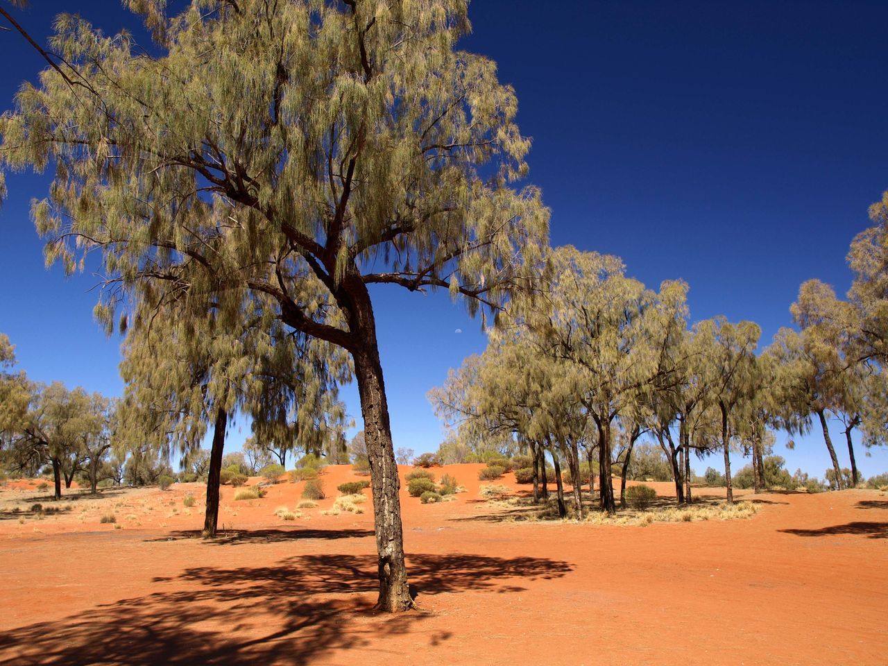 tree, nature, sand, tranquility, beauty in nature, tranquil scene, blue, scenics, sunlight, clear sky, landscape, outdoors, day, no people, sky, branch, growth, arid climate, blue sky