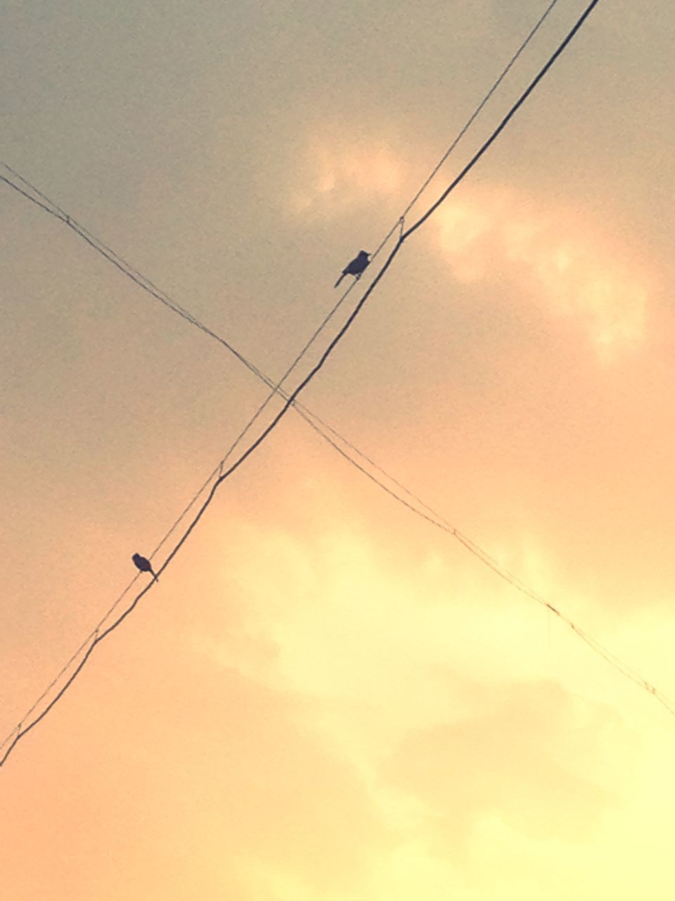 cable, sunset, power line, connection, low angle view, electricity, power supply, sky, silhouette, telephone line, no people, fuel and power generation, cloud - sky, technology, nature, bird, outdoors, electricity pylon, beauty in nature, overhead cable car, day, animal themes, vapor trail