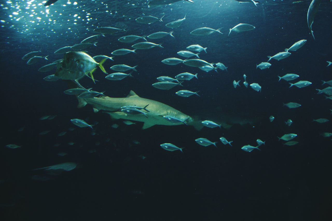 animal themes, animals in the wild, fish, sea life, large group of animals, water, underwater, swimming, nature, wildlife, no people, undersea, animal wildlife, sea, aquarium, beauty in nature, day