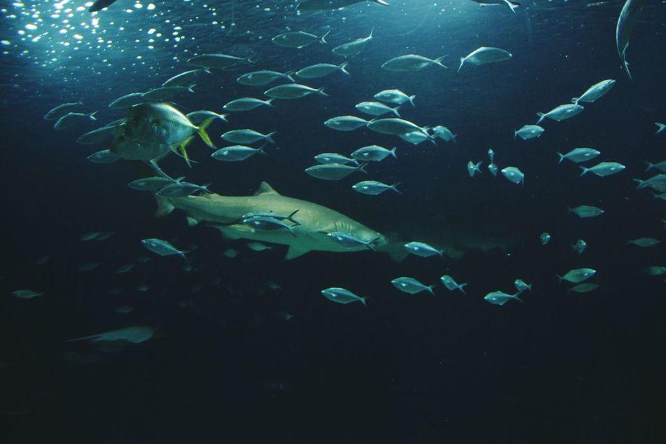 Underwater Fish Large Group Of Animals Nature Animal Themes Shark Fishes Water Animals In Captivity Aquarium Photography Animal Oceanographic Aquarium No People Sea Life