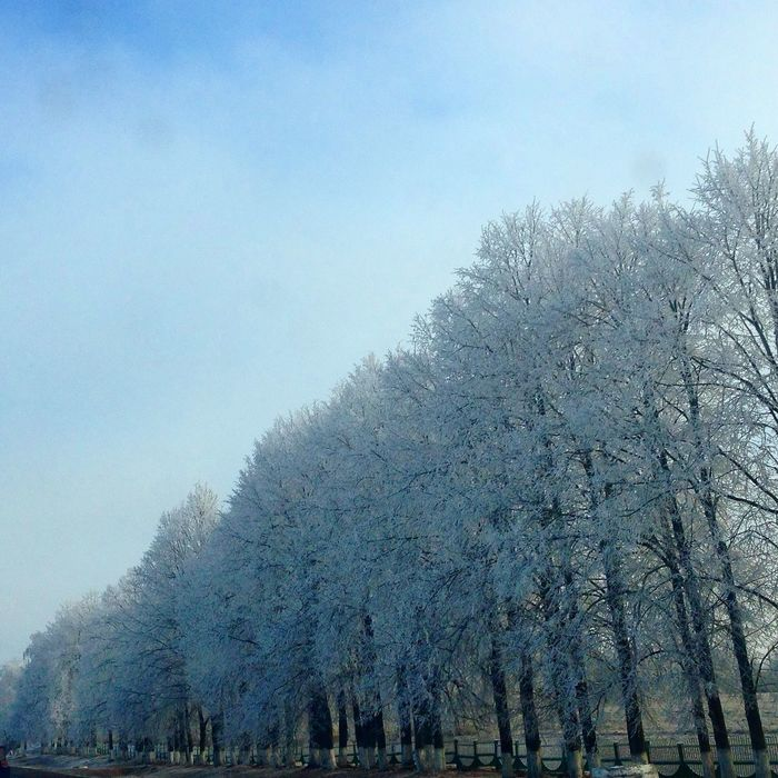 Лес зима иней Forest Nature Winter Trees Perspectives
