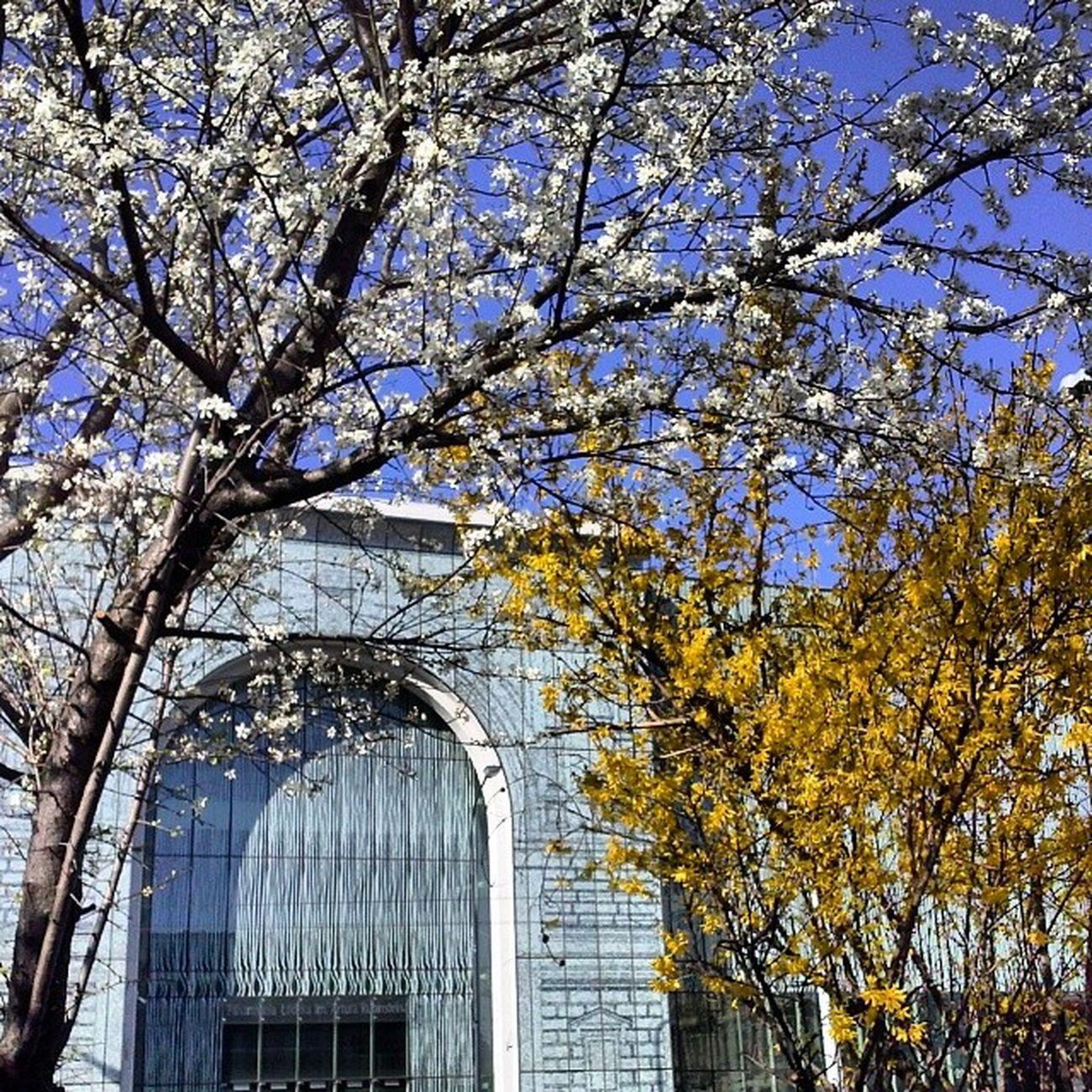 Wiosna Kwiaty S łońce ! Spring flowers and sun :))