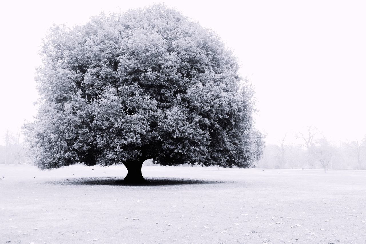 Beauty In Nature Nature Tree Black And White Photography Blackandwhite Black & White Park Greenwich Park