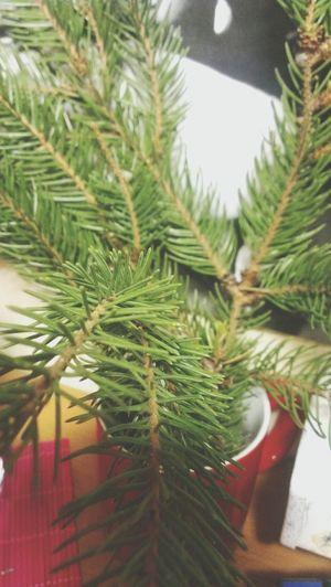 my Christmas tree.in my room:з