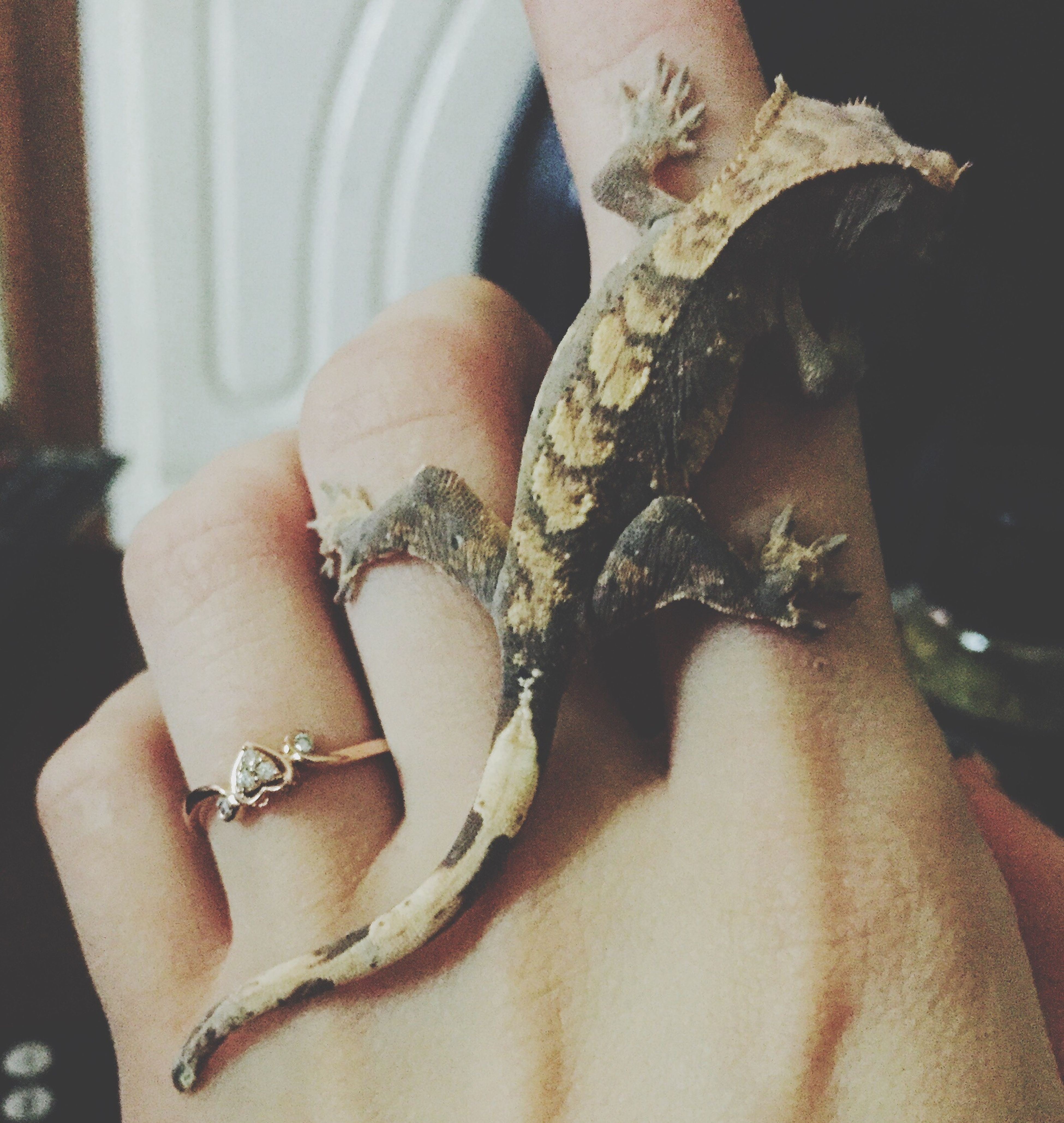 Crested Gecko Gecko Reptile Eyelash Gecko Promise Ring Ring Early Christmas Present Beautiful Rogers & Hollands