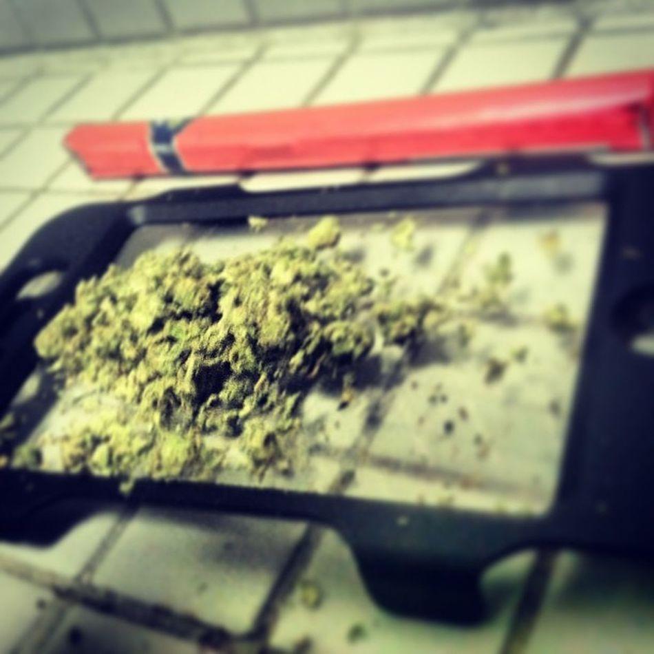 Had to put my phone case to some real use Stonershit Stonervision Campshit Skycamp Smoke Gethigher Insta420 Instafollow L4l Guyswhosmoke Ganja
