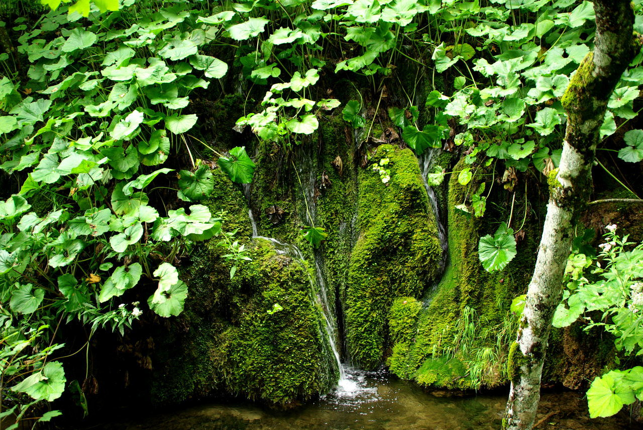 Plitvička jezera Beauty In Nature Branch Croatia Nature Day Fast Water Foliage Green And Water Green Color Green Color Growth Idyllic Leaf Lush Foliage Moving Water Natural Park Nature No People Outdoors Photosynthesis Plant Plitvicka Jezera Tree Water Water And Green Colors Water Reflections