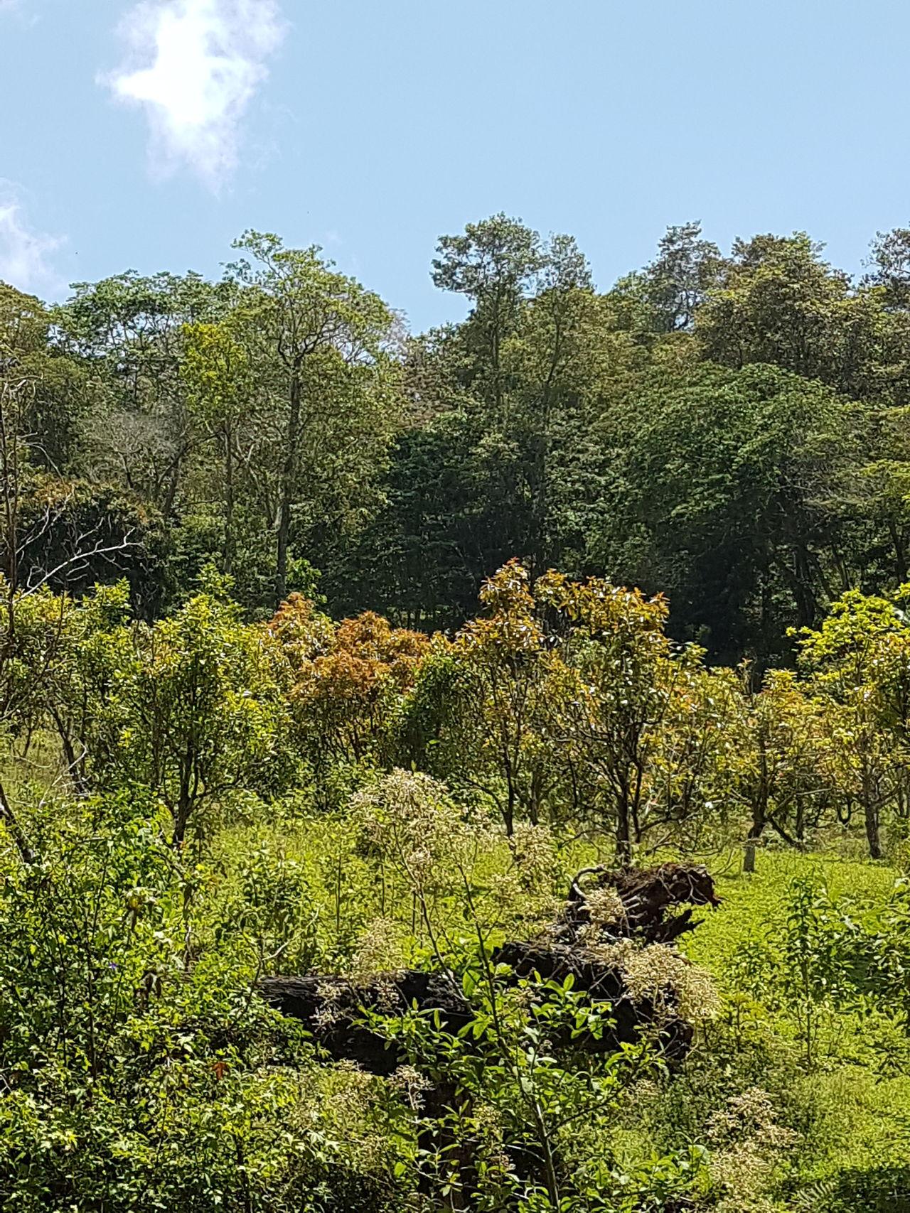 Parque Nacional La Tigra Honduras