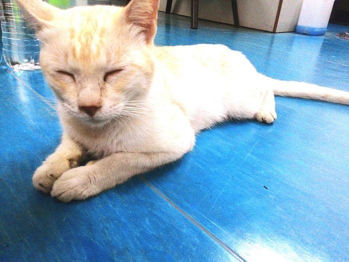 Cat Cat Lovers Catsagram Cat♡ Catlover Cats 🐱 Cat Watching Serdang Malaysia