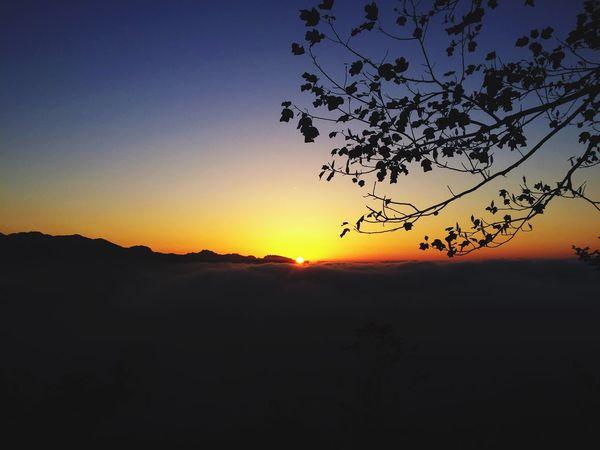 Sun Sunrise Tree Beauty In Nature Dark Clear Sky Nature Outline Orange Color Blue No People Scenics