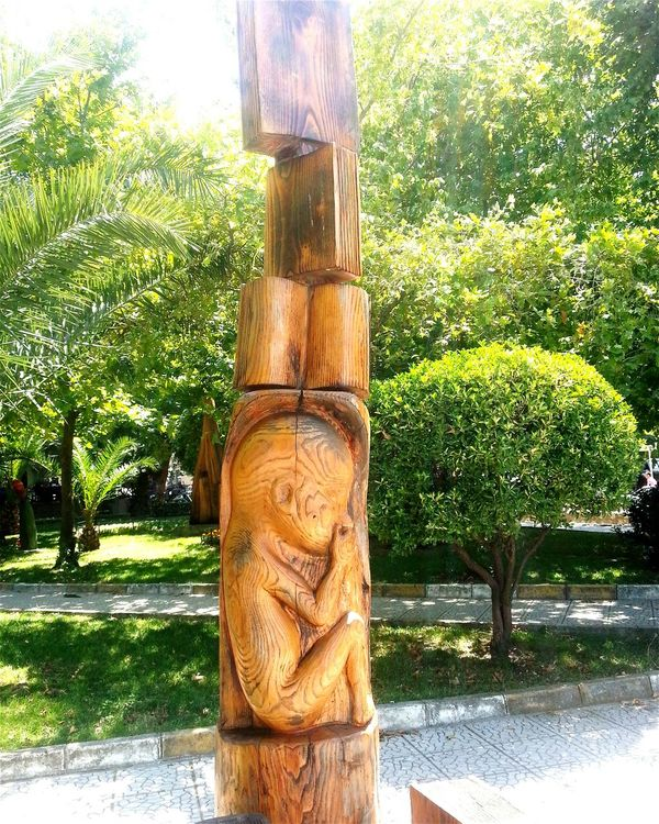 Wood Sculpture Evolution  Trees Pregnant Tree Embryo Fetus Baby Degirmendere Turkey How Do We Build The World?