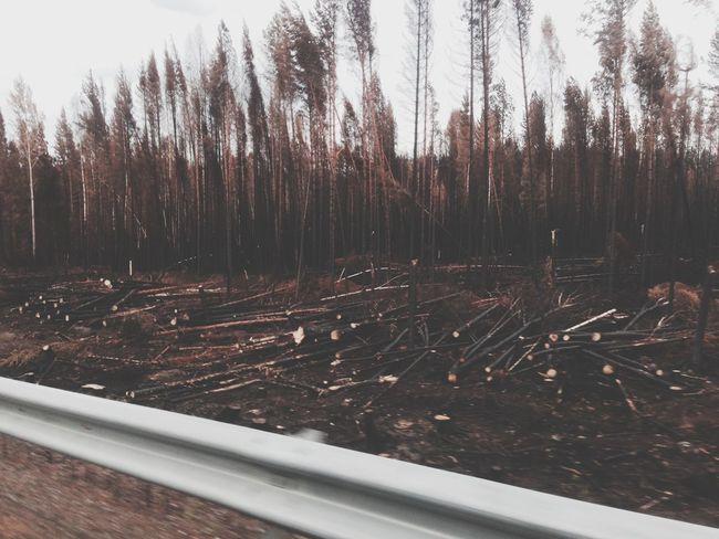 Efter branden