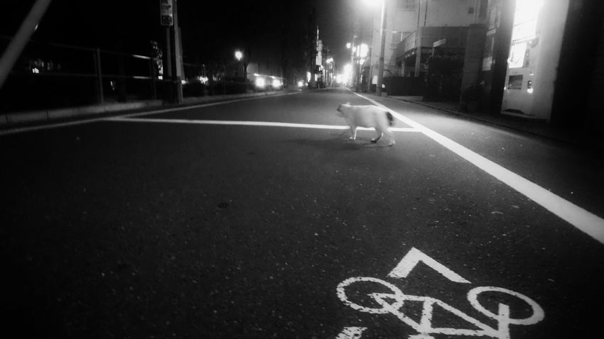 野良猫 野良猫ウォッチング 歩く猫 街貓 Cat Walking Stray Cat Night Town Night Lights Night Photography TOWNSCAPE Snapshot Snapshots Of Life Black And White Monochrome Monochrome_life Light And Shadow Vanishing Point On The Road Light Up Your Life 日常