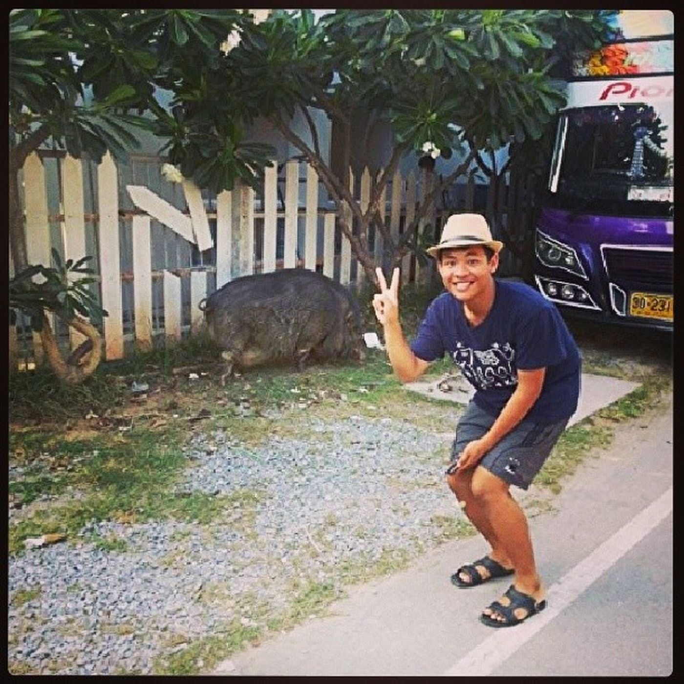 Big wild pig in the city !!! Scared Bigpig Trip Rayong Beach