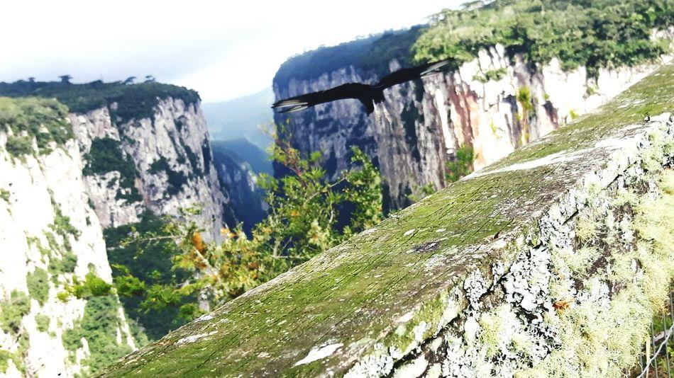Terra Flora Cascata Montes PerigoAve Voar Voo Corvo Cambara Do Sul Canions AndreLima Passaros Passaro Passarinhos Plenovoo Ecologic Perfect Exclusivo Exclusive  Nature Perfeito Natureza Animal Mundoanimal