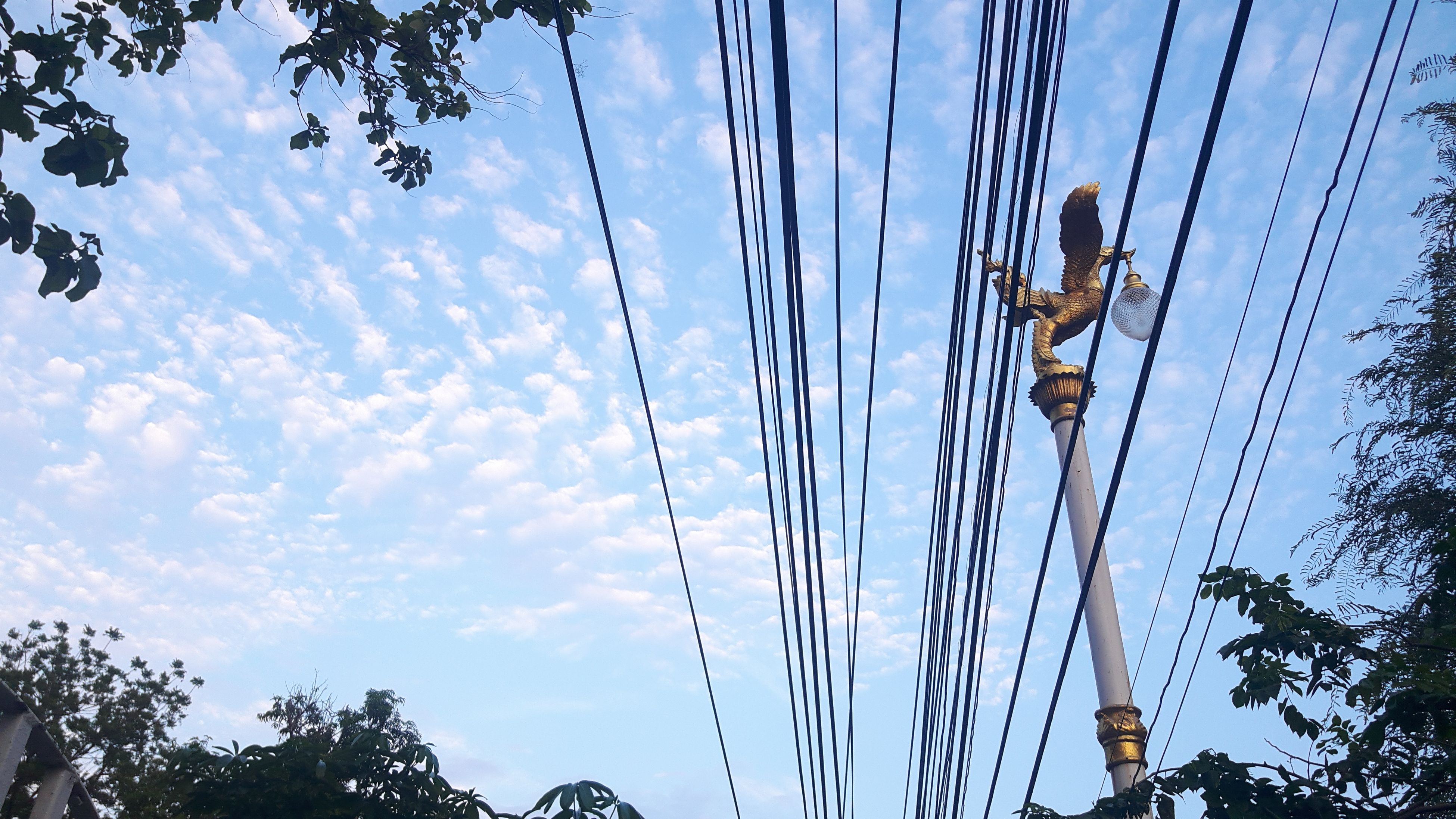 low angle view, sky, blue, power line, tree, cable, cloud - sky, power supply, cloud, electricity, electricity pylon, connection, outdoors, day, nature, no people, growth, silhouette, cloudy, pole