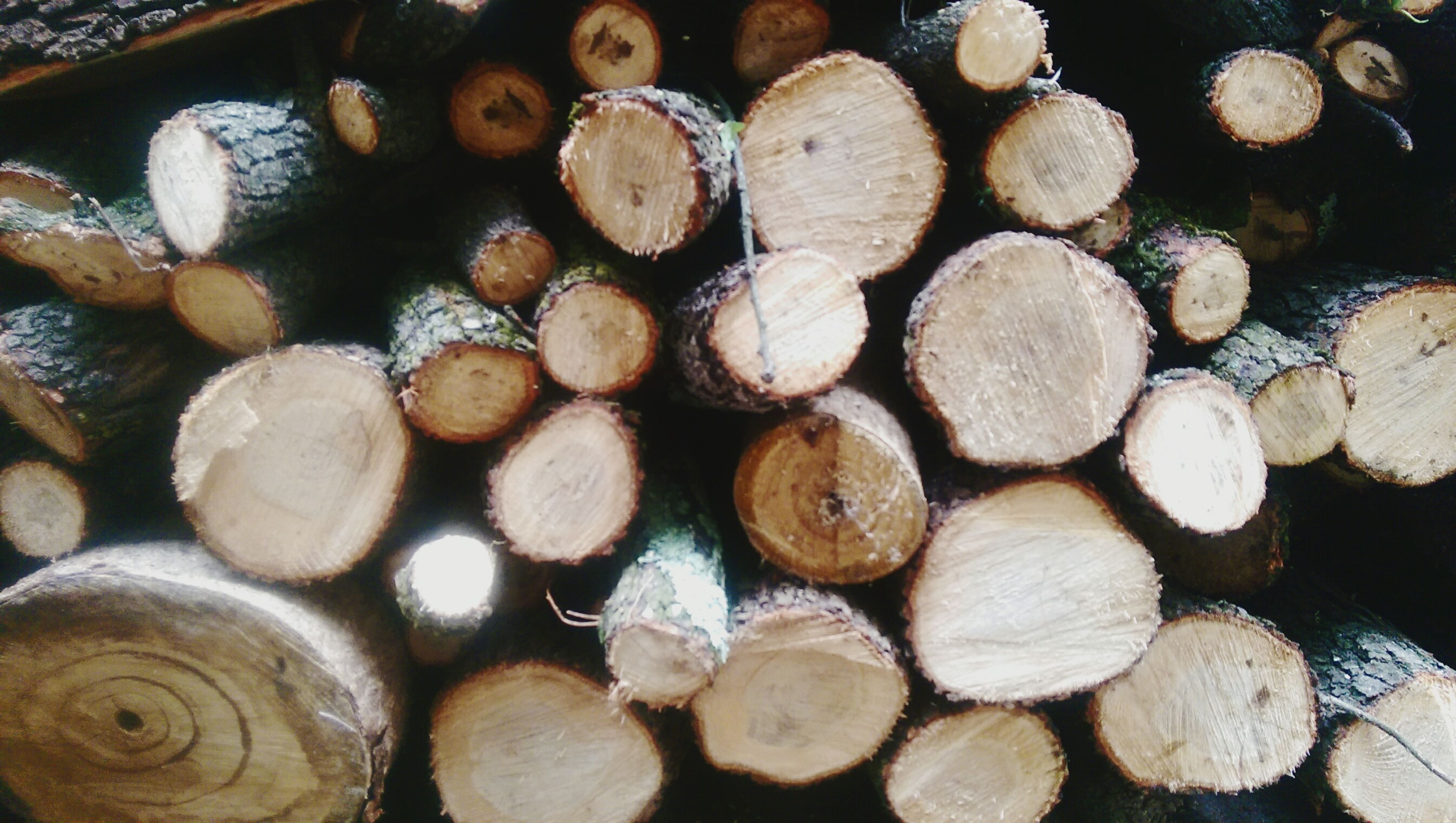large group of objects, abundance, log, lumber industry, deforestation, stack, wood - material, firewood, full frame, high angle view, backgrounds, food and drink, nut - food, still life, heap, food, brown, close-up, wood, timber