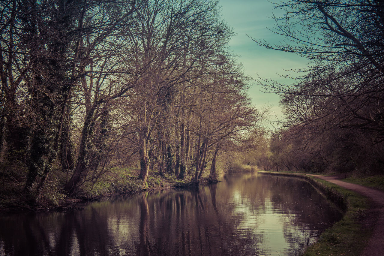 tree, reflection, water, lake, bare tree, tranquility, nature, tranquil scene, scenics, beauty in nature, outdoors, waterfront, forest, no people, landscape, sky, day, branch