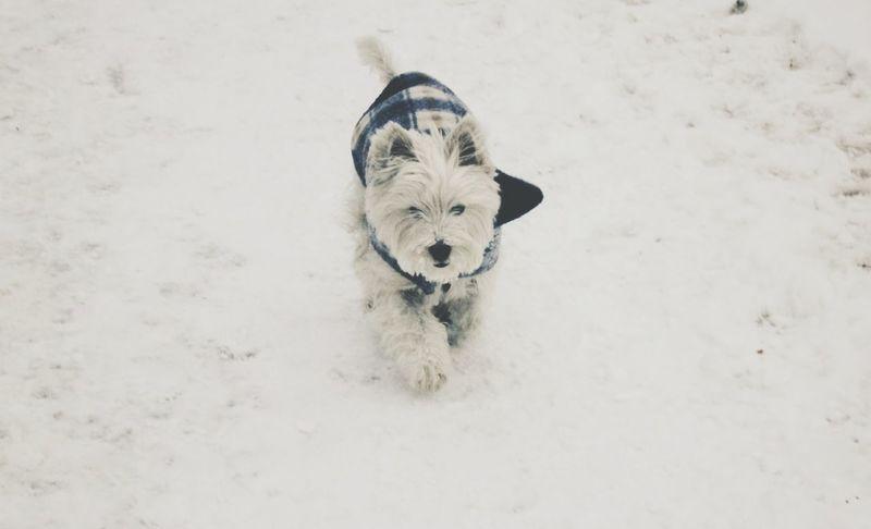 Snow Winter Pets Dogs
