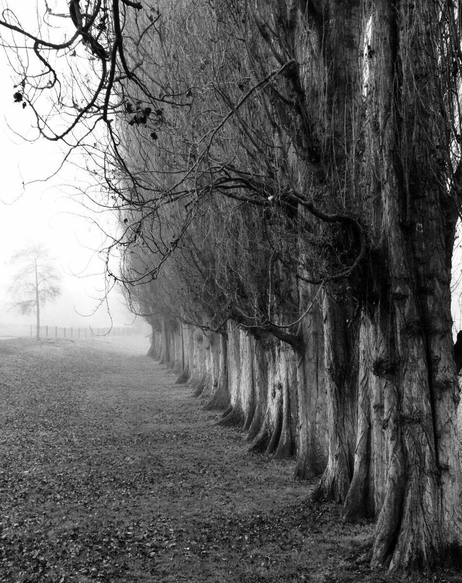 Tree Bare Tree Nature Tranquility Outdoors Tranquil Scene Branch No People Beauty In Nature The Way Forward Day Growth Scenics Sky Abingdon-on-Thames Canonphotography