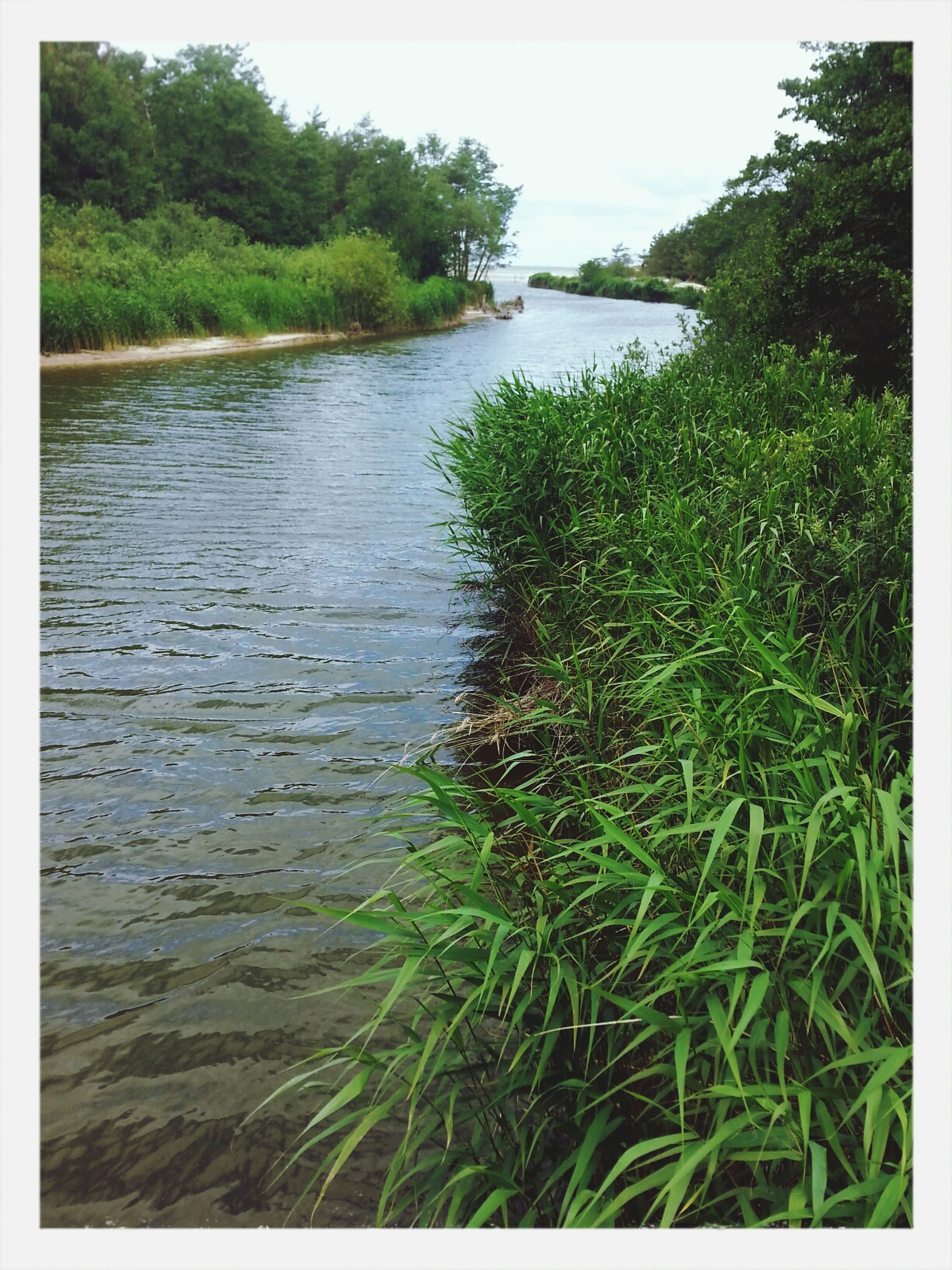 water, transfer print, lake, nature, grass, tranquility, auto post production filter, growth, tranquil scene, plant, reflection, beauty in nature, tree, scenics, river, day, no people, outdoors, rippled, green color